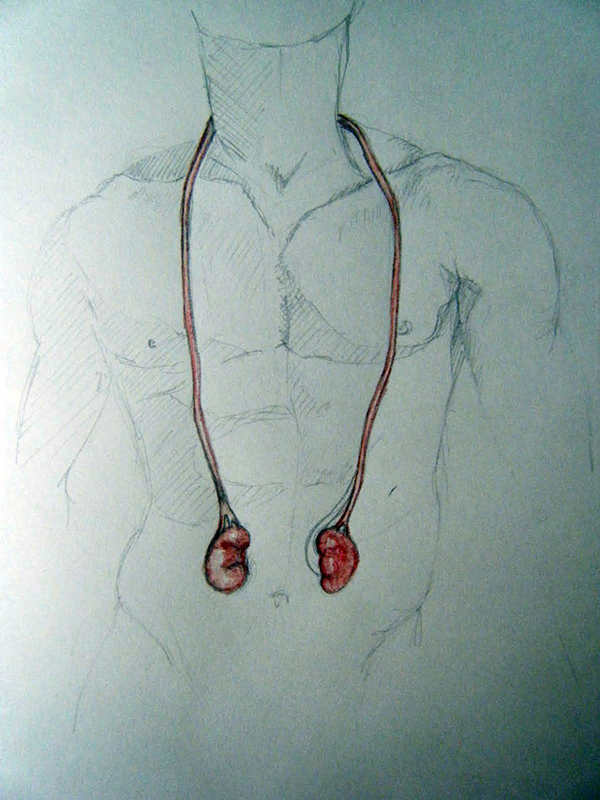 JEWELLERY INSPIRED BY HUMAN ORGANS