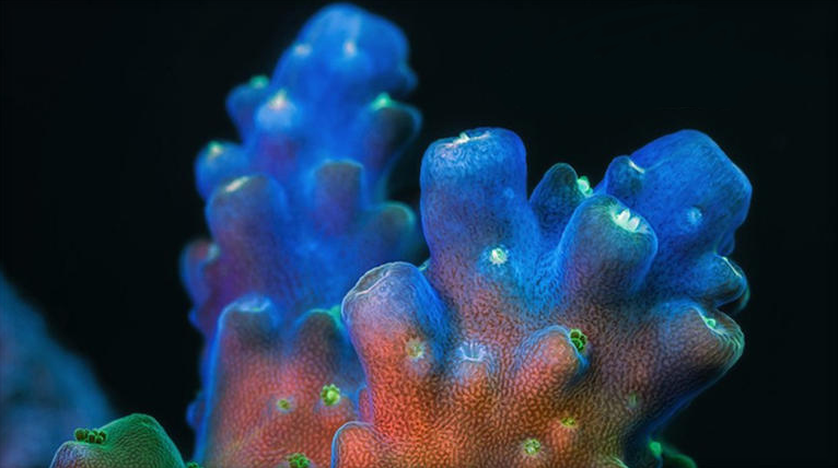Stunning time lapse showcases beauty under the sea