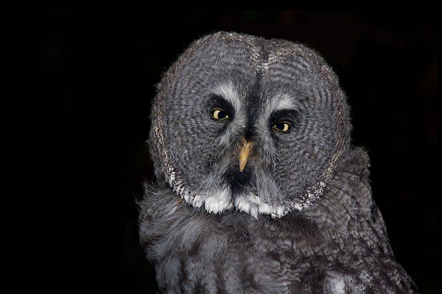 Study: Night Owls Might Be Smarter, Stronger, Better Looking